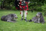 Deerhounds, Klit & Pipe