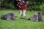 Deerhounds, Klit & Pipe